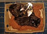 Alcohol Induced Neuropathy Part 2-kittens-jpg